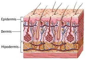 microblading-cejas-resultados-micropigmentación